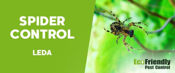 Spider Control Leda