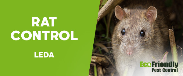 Rat Pest Control Leda