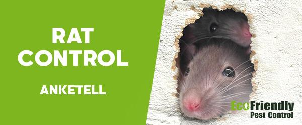Rat Pest Control Anketell