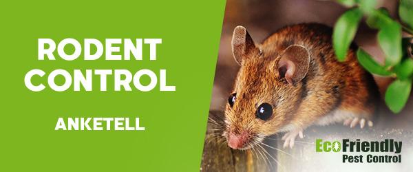 Rodent Treatment Anketell