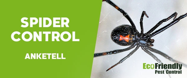 Spider Control Anketell