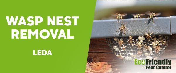 Wasp Nest Remvoal Leda