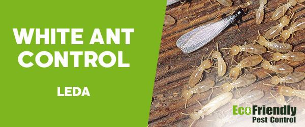 White Ant Control Leda