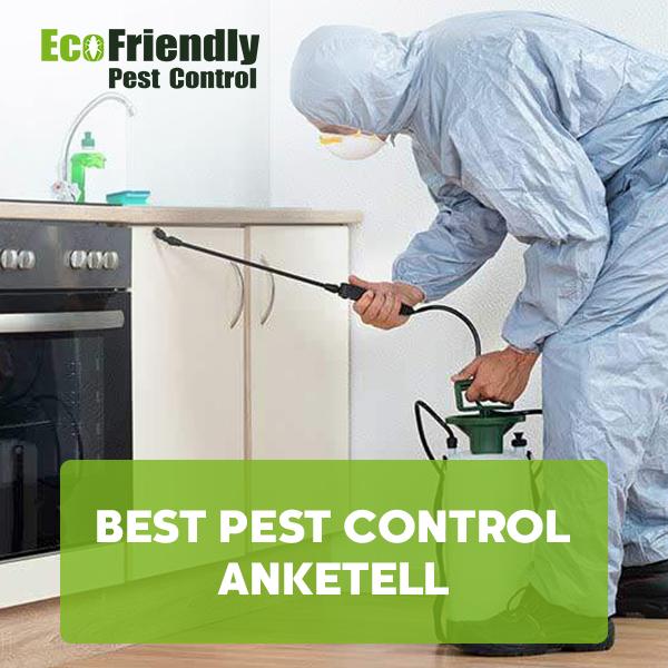 Best Pest Control Anketell