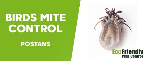 Bird Mite Control  Postans