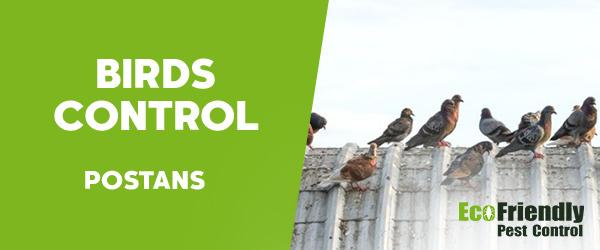 Birds Control  Postans