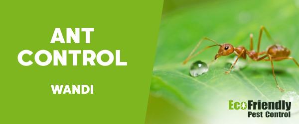 Ant Control Wandi