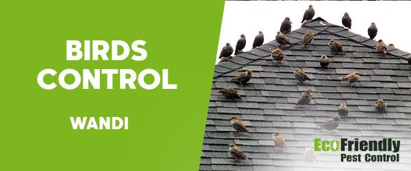 Birds Control Wandi
