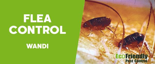 Fleas Control Wandi