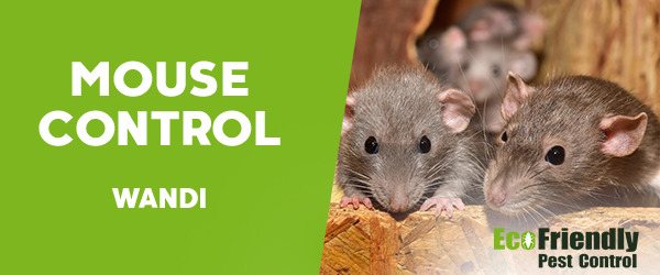 Mouse Control Wandi