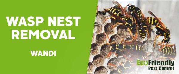 Wasp Nest Remvoal Wandi