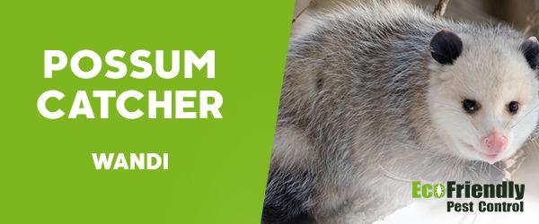 Possum Catcher Wandi