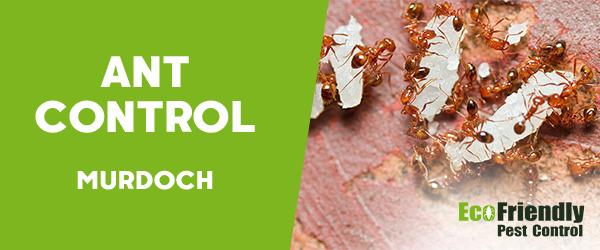 Ant Control  Murdoch