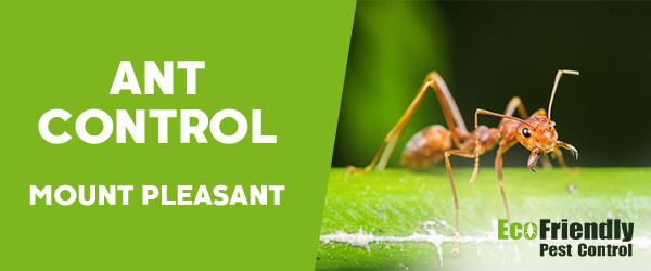 Ant Control Mount Pleasant
