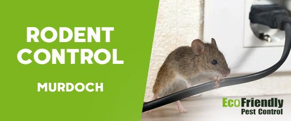 Rodent Treatment  Murdoch