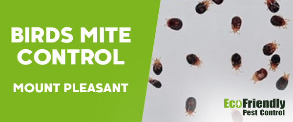 Bird Mite Control Mount Pleasant