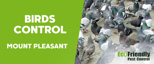 Birds Control Mount Pleasant