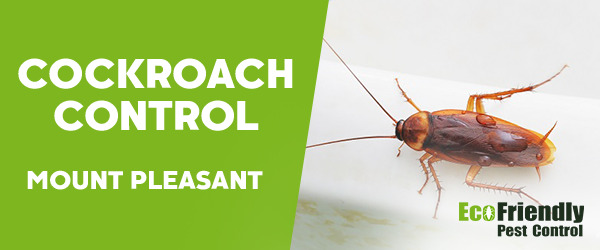 Cockroach Control Mount Pleasant