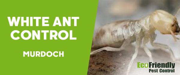White Ant Control  Murdoch