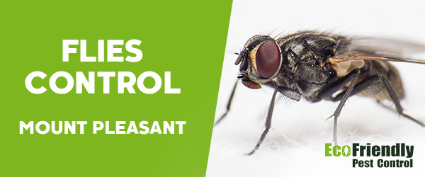 Flies Control Mount Pleasant
