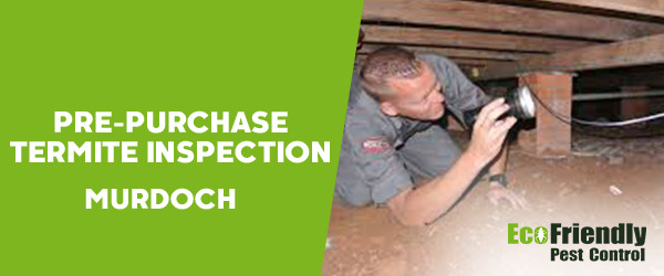Pre-purchase Termite Inspection  Murdoch