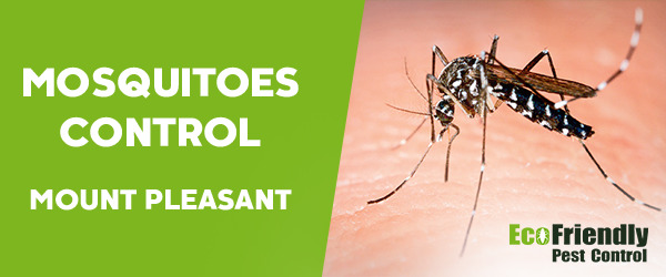 Mosquitoes Control Mount Pleasant