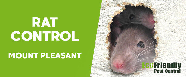 Rat Pest Control Mount Pleasant