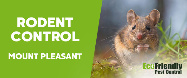 Rodent Treatment Mount Pleasant