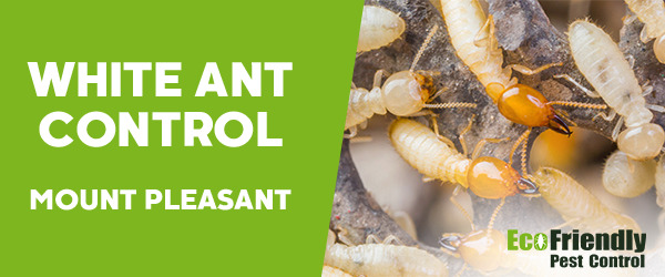 White Ant Control Mount Pleasant