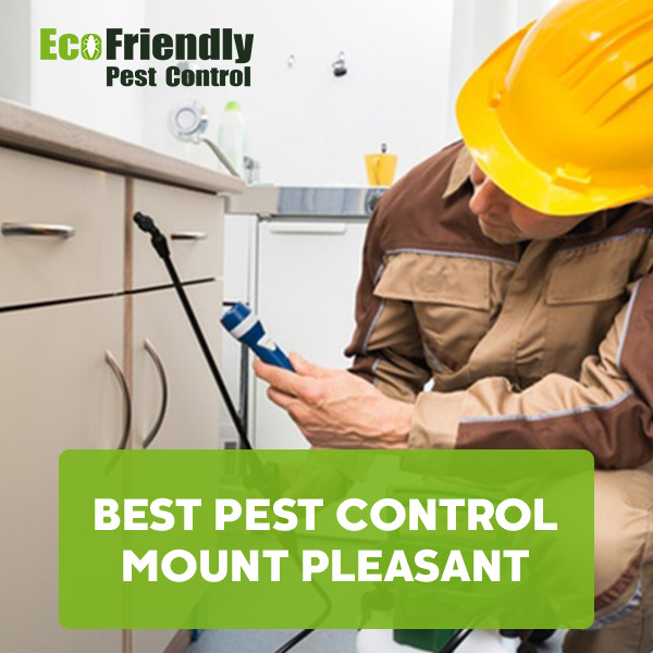 Best Pest Control Mount Pleasant