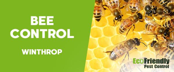 Bee Control  Winthrop