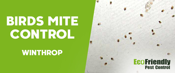 Bird Mite Control  Winthrop