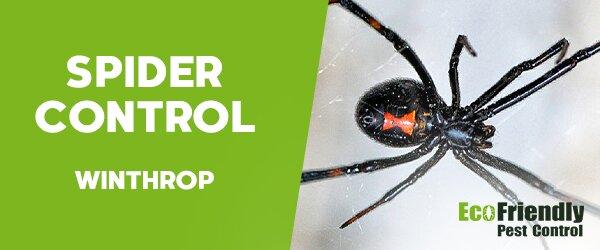 Spider Control  Winthrop