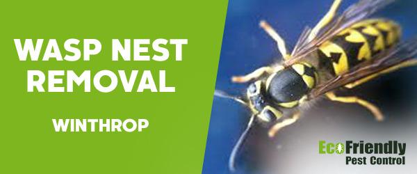 Wasp Nest Remvoal  Winthrop