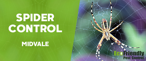Spider Control Midvale