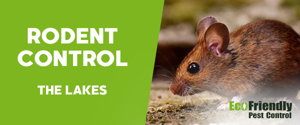 Rodent Treatment  The Lakes