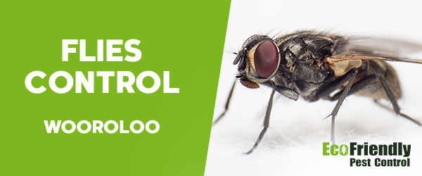 Flies Control Wooroloo