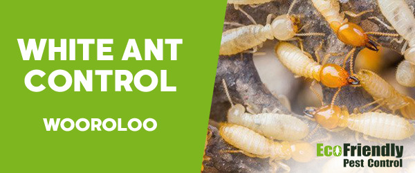 White Ant Control Wooroloo