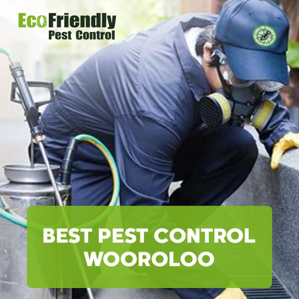 Best Pest Control Wooroloo