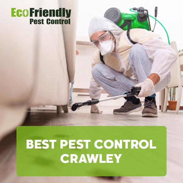 Best Pest Control Crawley