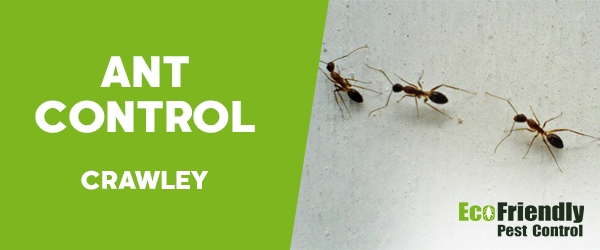 Ant Control Crawley
