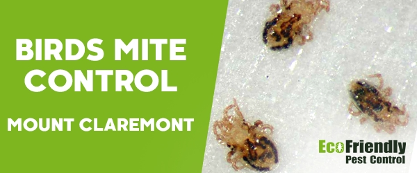 Bird Mite Control Mount Claremont