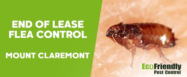 End of Lease Flea Control Mount Claremont