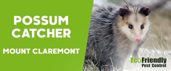 Possum Catcher Mount Claremont