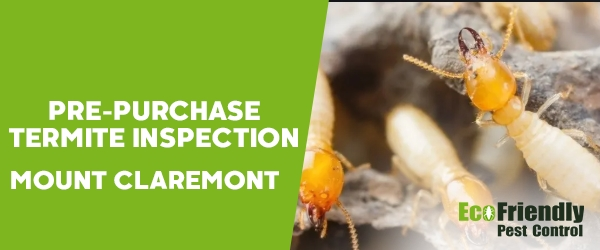 Pre-purchase Termite Inspection Mount Claremont