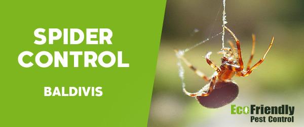 Spider Control Baldivis