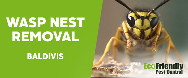 Wasp Nest Remvoal Baldivis