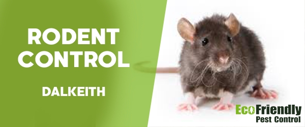 Rodent Treatment  Dalkeith