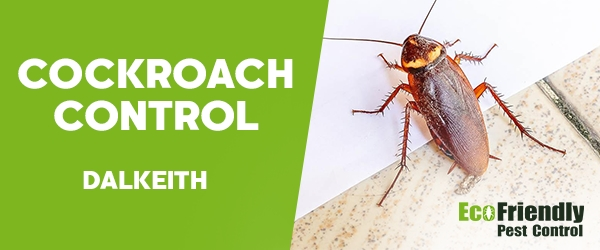 Cockroach Control  Dalkeith