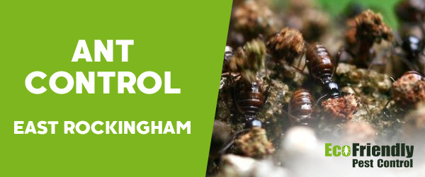 Ant Control East Rockingham